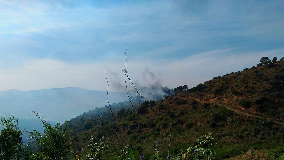 bosco angimbe